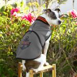 All Weather Jacket by Wildebeest