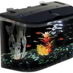 Attractive Aquarius Aq15005 Aquarius 5 Rounded 5-Gallon Aquarium Kit for Beginners