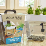 Back to the Roots AquaFarm Uses Aquaponics System for Self-Cleaning Fish Tank