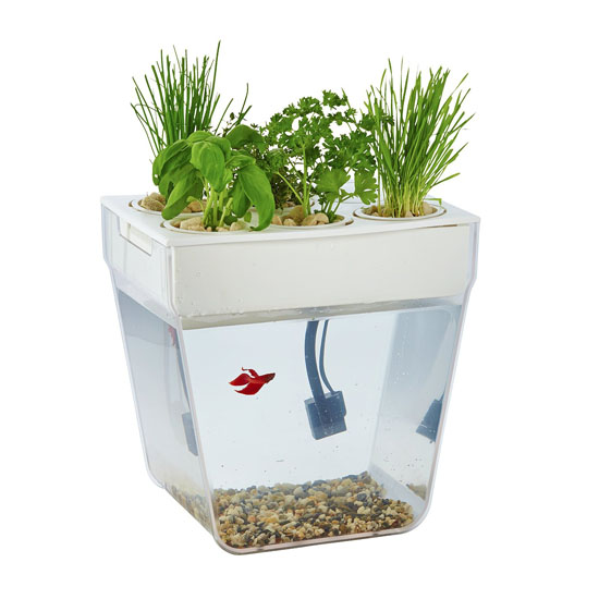 Back to the Roots Water Garden Aquarium Starter Kit