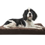 Betsy Ultra Plush Deluxe Ortho Pet Bed Relives Joint Pain and Promotes Better Circulation