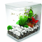 Modern and Compact BiOrb 15L Flow Aquarium Look Great In Any Room