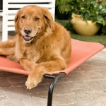 Coolaroo Elevated Pet Bed with Knitted Fabric : Hammock Style Bed for Your Dog
