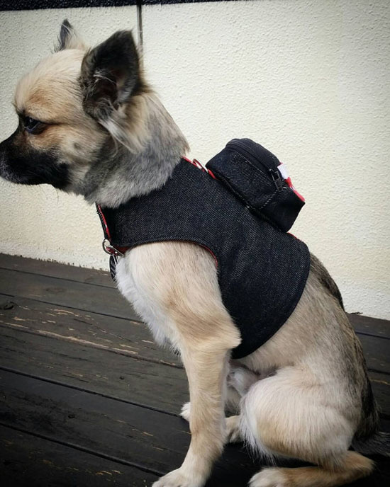 Cute Denim Dog Harness with Detachable Backpack