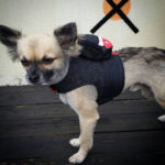Cute Denim Dog Harness with Little Backpack Is Certainly An Attention Grabber