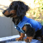 Dress Your Dog in Style with This Cool Blue Denim Jacket