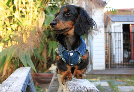Cool Denim Dog Jacket/Vest by Pablo and Co. Boutique