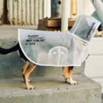 Cool, Stylish, Transparent Rain Coat for Your Dog from Pawkier