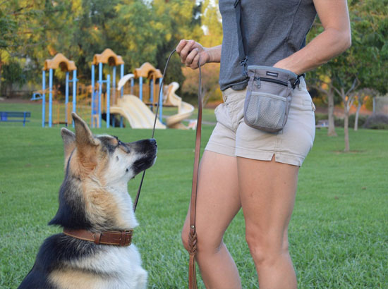 Dog Treat Training Bag with Mesh Pouch for Ball or Toys