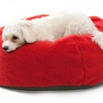 Colorful Eco Drop Dog Bed : Green Pet Bed for Green Conscious Pet Owner
