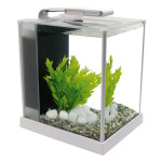 Fluval Spec III Aquarium Kit : Modern Fish Tank with 31 LED Lighting System
