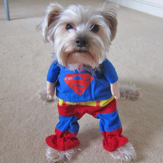 Top 20 Dog Halloween Costumes - Alfie Superman Dog Costume