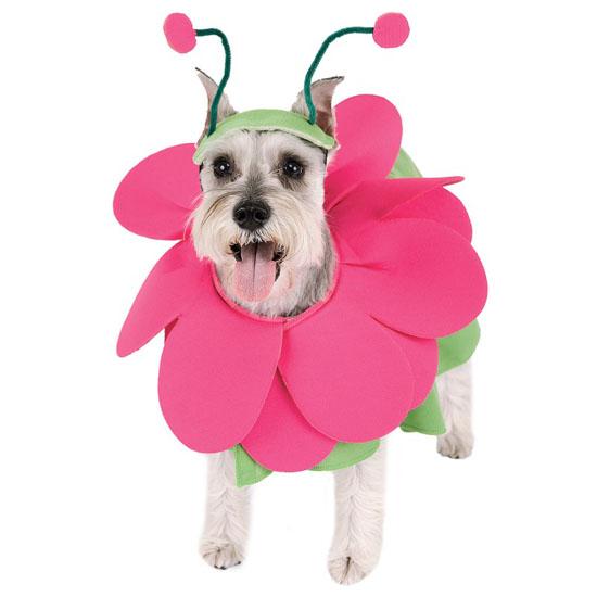 Top 20 Dog Halloween Costumes - Bloomin' Snout Pet Costume