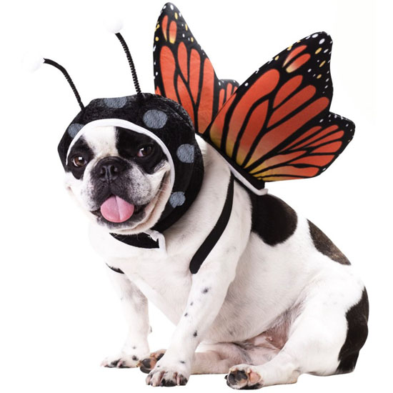 Top 20 Dog Halloween Costumes - Butterfly Pet Costume