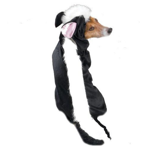 Top 20 Dog Halloween Costumes - Lil' Stinker Dog Costume