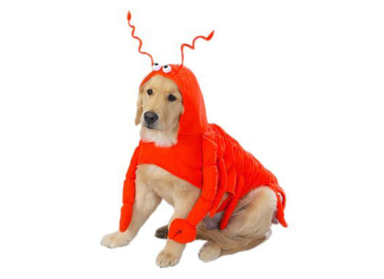 Top 20 Dog Halloween Costumes - Lobster Paw Dog Costume