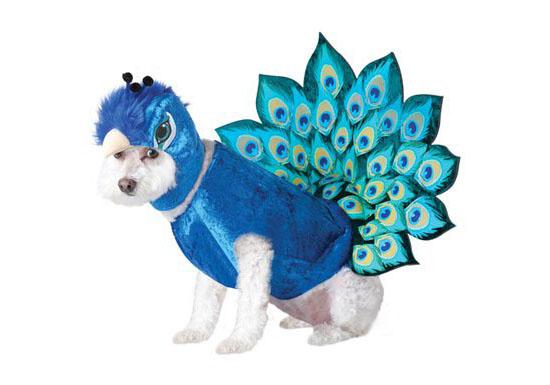 Top 20 Dog Halloween Costumes - Peacock Pet Costume