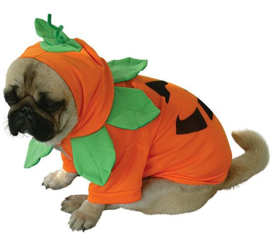 Top 20 Dog Halloween Costumes - Pumpkin Pooch Dog Costume
