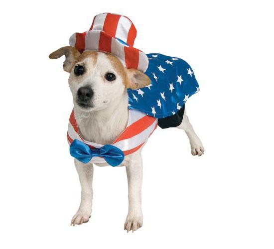 Top 20 Dog Halloween Costumes - Uncle Sam Dog Costume