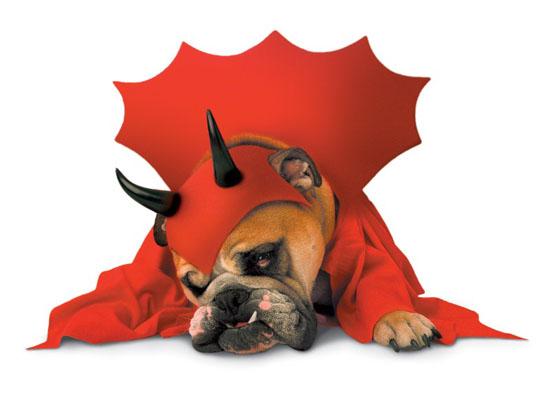 Top 20 Dog Halloween Costumes - Zelda Dog Costume