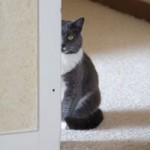Learn How to Stop Cat from Urinating on Carpet