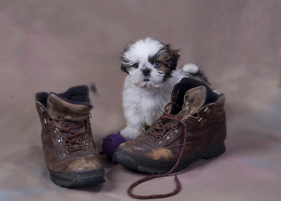 How to Train a Puppy : Train An Obedient and Balanced Dog Right From The Start