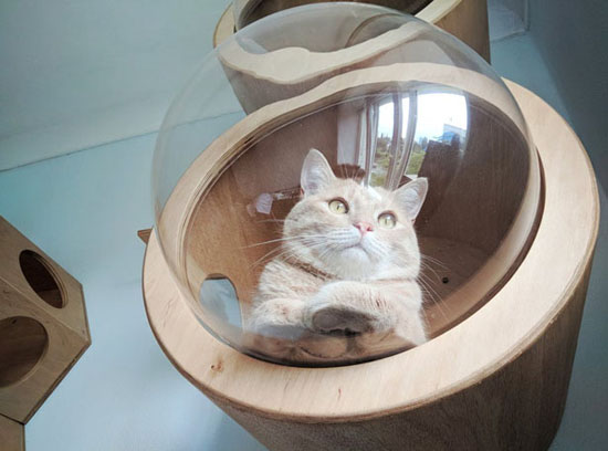 Handmade Indoor Round Cat House by PetsHelperCo
