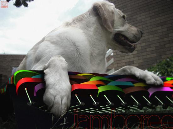 Jamboree Dog Hammock