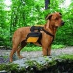 Let Your Dog Carry His Own Water and Treats with Kurgo Wander Pack Dog Backpack