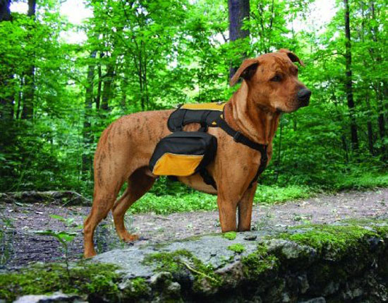 Kurgo Wander Pack Dog Backpack