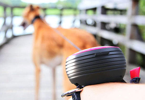 Lishinu Handsfree Retractable Dog Leash