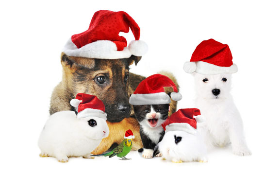 Merry Christmas Everyone! - With a dog in your life, Christmas is going to be that much better and sometimes, it is better to spend Christmas home with the dog than out with the merrymakers. Have a Doggone Merry Christmas!
