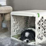 PAWD Nesting Space for Your Dog or Cat That Doesn't Look Like A Jail