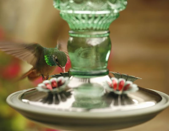 Perky Pet Antique Bottle Hummingbird Feeder