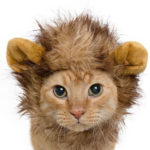 Pet Krewe Lion Mane Cat Costume Transforms Your Cat Into Adorable Lion