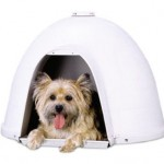 Petmate Dogloo Xt Dog House Keeps Your Dog Warm During Winter and Cool During Summer