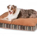 Stylish Petmate Microban Deluxe Pillow Pet Bed Is An Ideal Bed for Large Dog