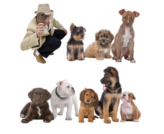 PooPrints Canine DNA System