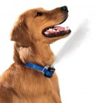 Citronella Anti-Bark Dog Collar Trains Your Dog To Behave Painlessly