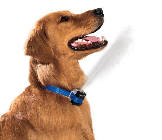 Premier GentleSpray Citronella Anti-Bark Dog Collar