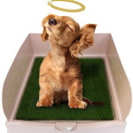 Rascal Dog Litter Box Is Completed with Fake but Realistic Grass Pad for Easy Transition