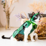 Cute Japanese Samurai Armor Costume for Your Furry Warriors