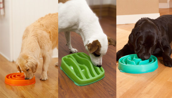 Slo-Bowls : Slow Feeders for Dogs