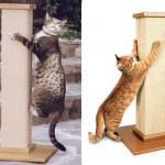 Don't Declaw Your Cat, Use SmartCat Ultimate Scratching Post!