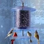 Songbird Essentials All Weather Feeder Prevents Wet Seeds Through All Seasons