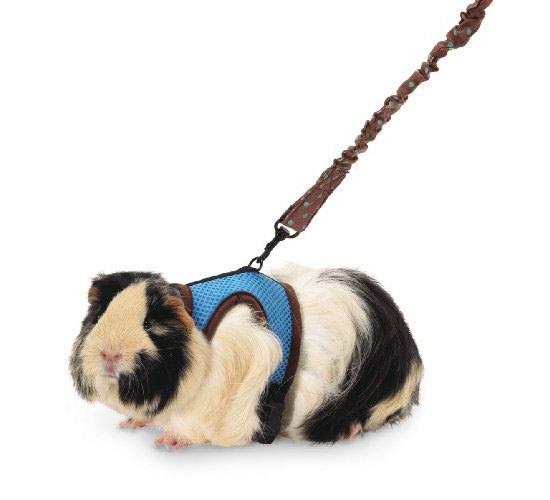Super Pet Ferret Comfort Harness and Stretchy Leash