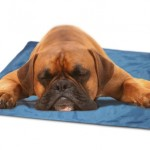 Green Pet Shop Self Cooling Pet Pad Cools Your Dog During Hot Days Without Electricity