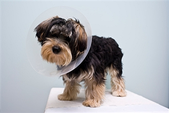 The Importance of Spaying and Neutering Dogs : Pros and Cons