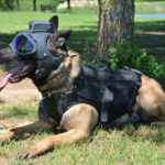 Trident K9 Tactical Helmet for Working Dogs by K9Helmets