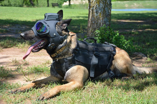 Trident K9 Tactical Helmet from K9Helmets